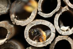 Internal view of a bee hotel