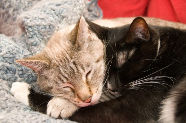 Two cats cuddling, keeping their relationship alive